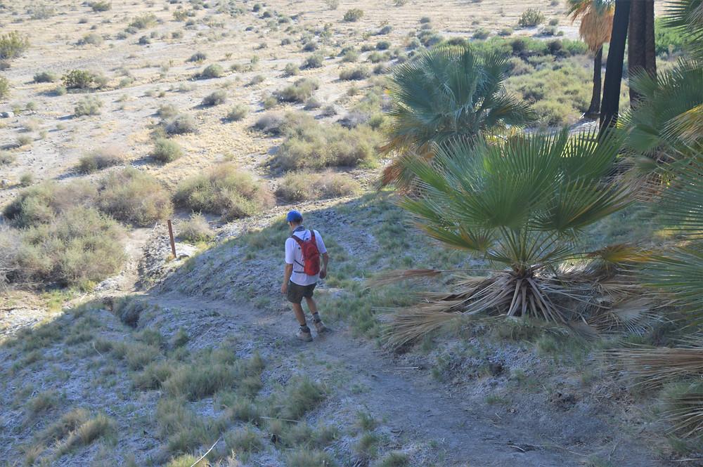 Willis Palm Loop Trail