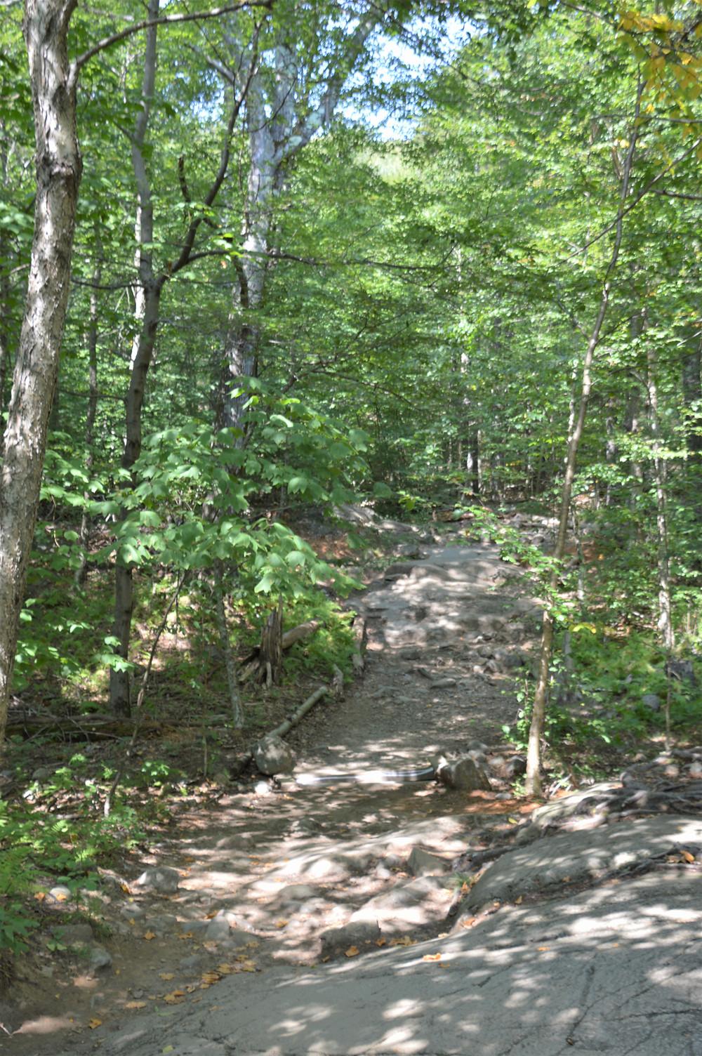 Mount Monadnock White Dot trail
