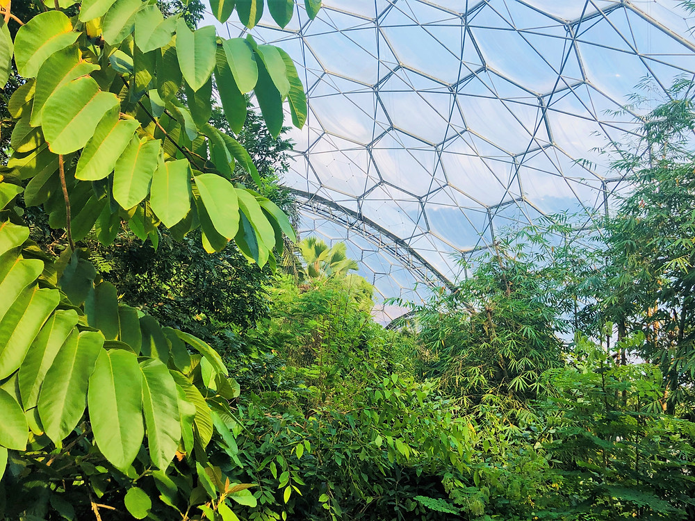 The Rainforest Biome in the Eden Project contains over 1,200 different species of plant from West Africa, SE Asia, South America and various tropical islands