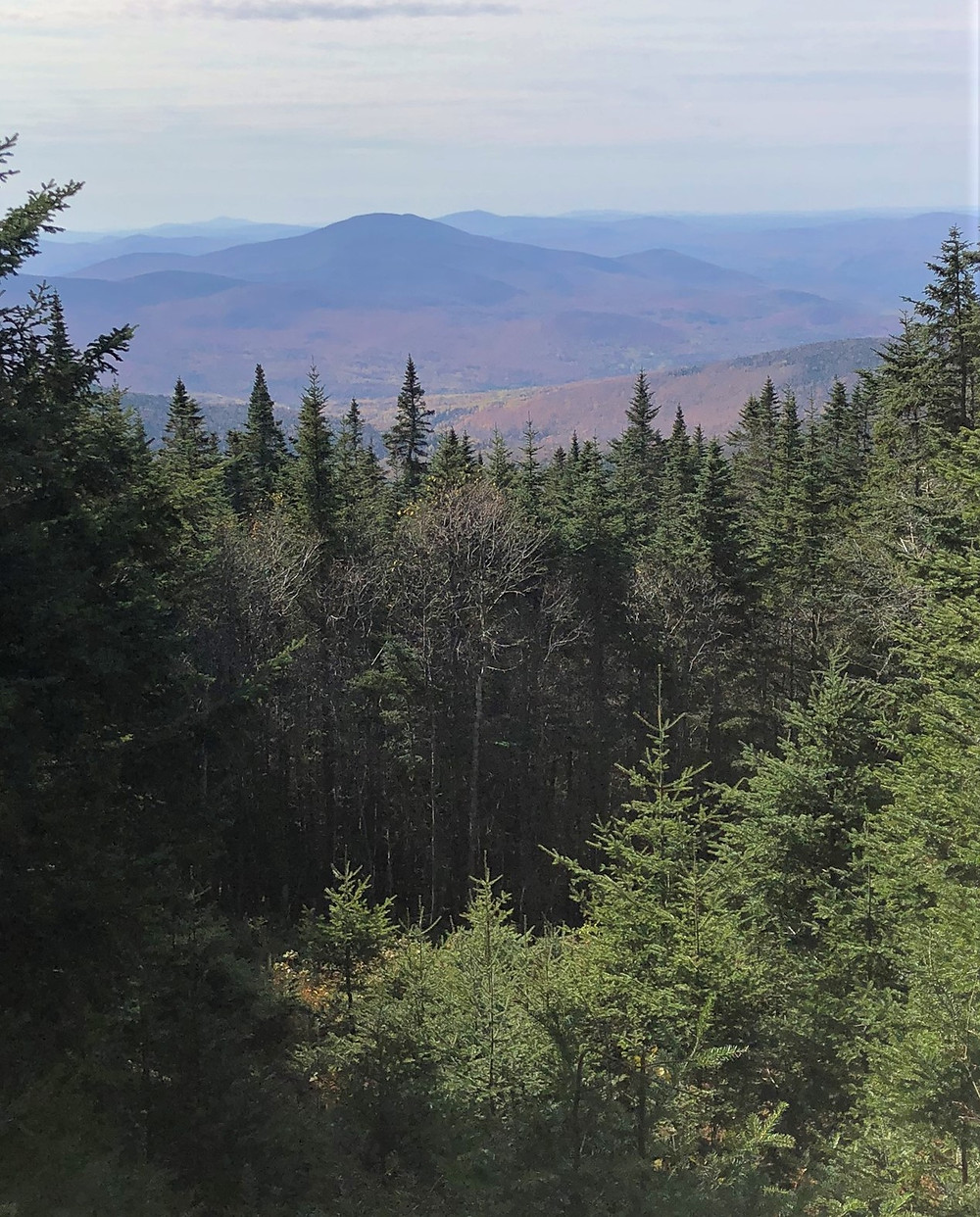 Mt Cushman or Mt Carr from the Gorge Brook trail leading to the Mt Moosilauke summit in NH. NH 4000 footer