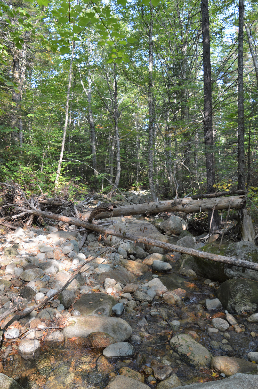 Stream crossing Edmands Path to Mt Eisenhower