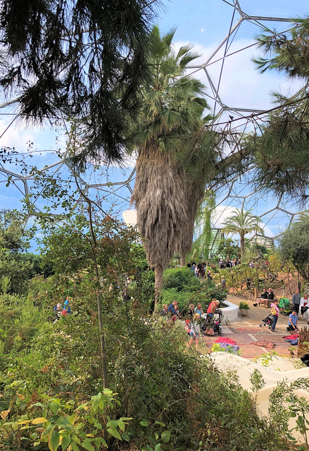 The Mediterranean Biome in the Eden Project is home to over 1,300 different plant species