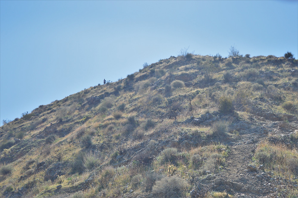 Hiking ridgeline of trail in Santa Rosa Mountains to Murray Hill