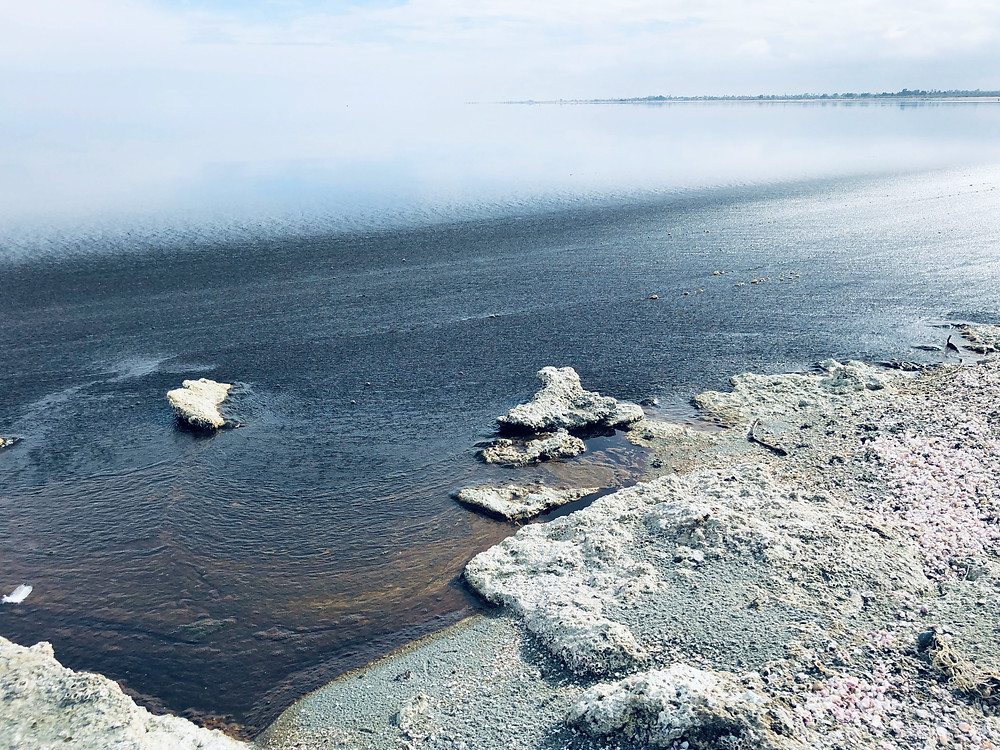 Colors in Salton Sea water caused by out-of-control algae growth