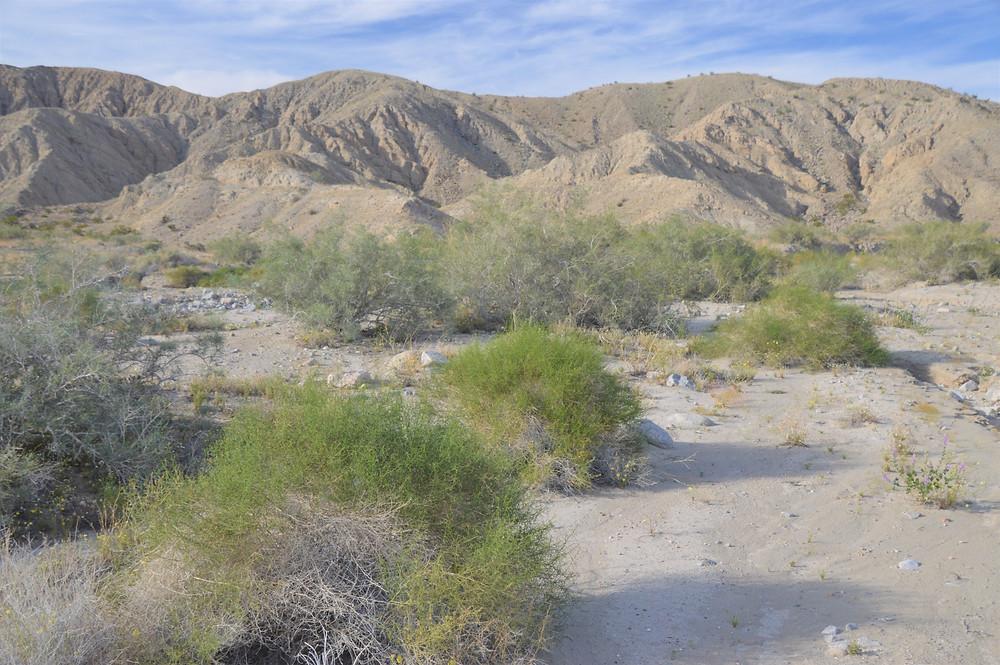 Foothills of the Little San Bernardino Mountains on the Willis Palm Trail.