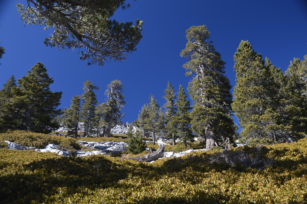 Hiking on the San Jacinto summit trail from the Rangers Station