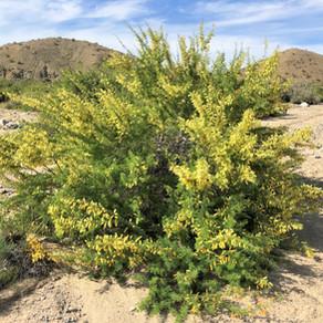 FODM 2020 CNC Hike: Willis Palms Oasis Trail
