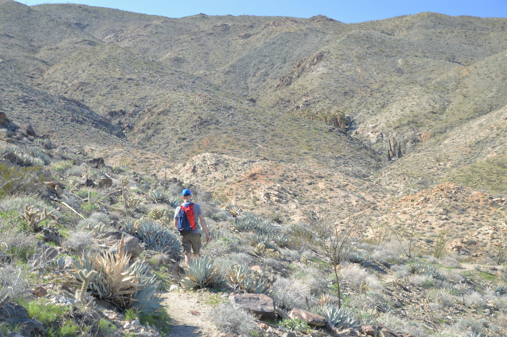 Descending on trail to the palm oasis on the Bear Creek Oasis Trail in La Quinta Cove
