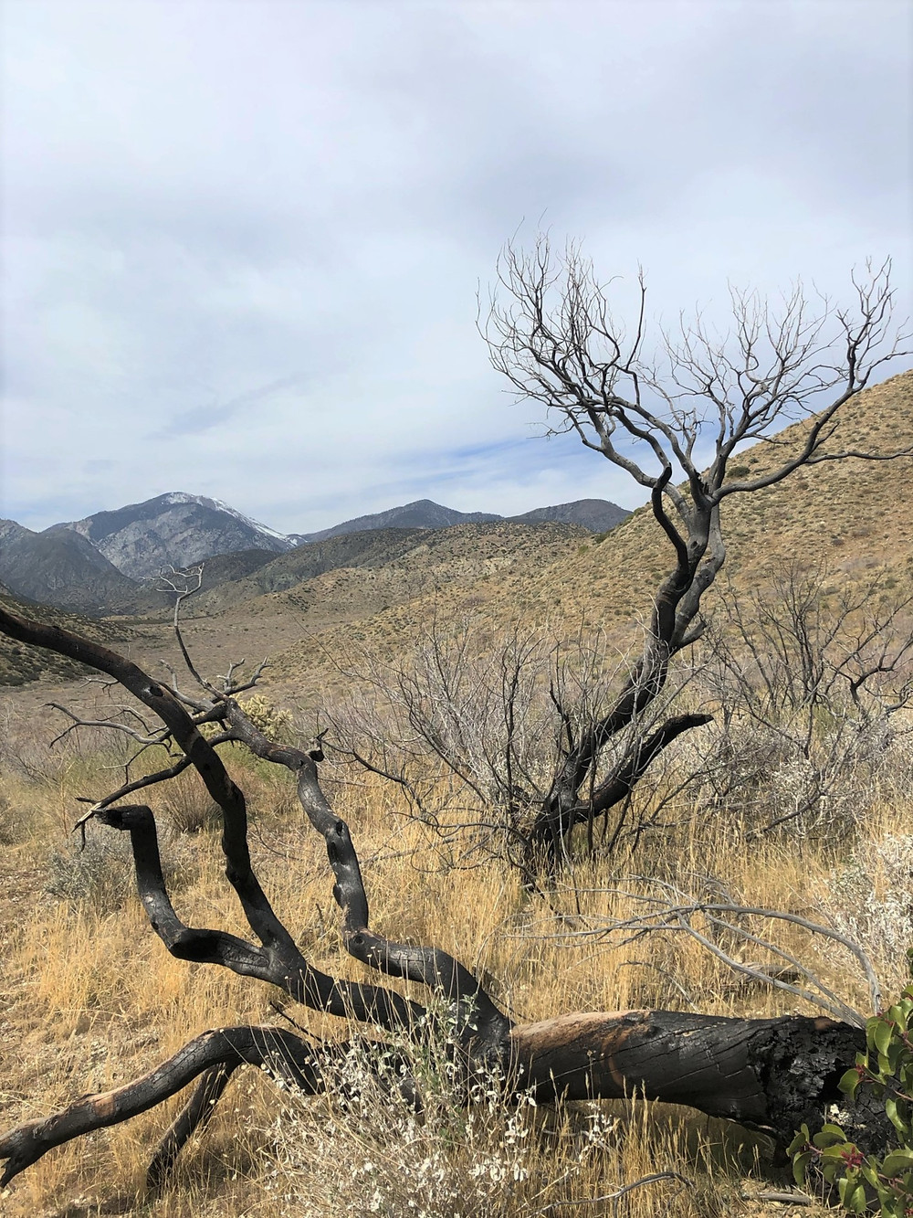 Hiking PCT in the San Gorgonio Wilderness area