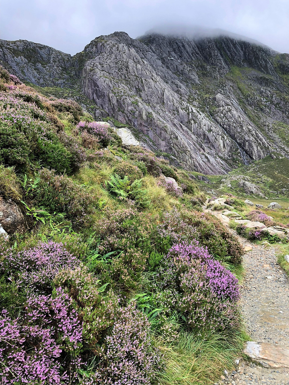 Flowering heather lined the path leading to Devil's Kitchen in Snowdonia