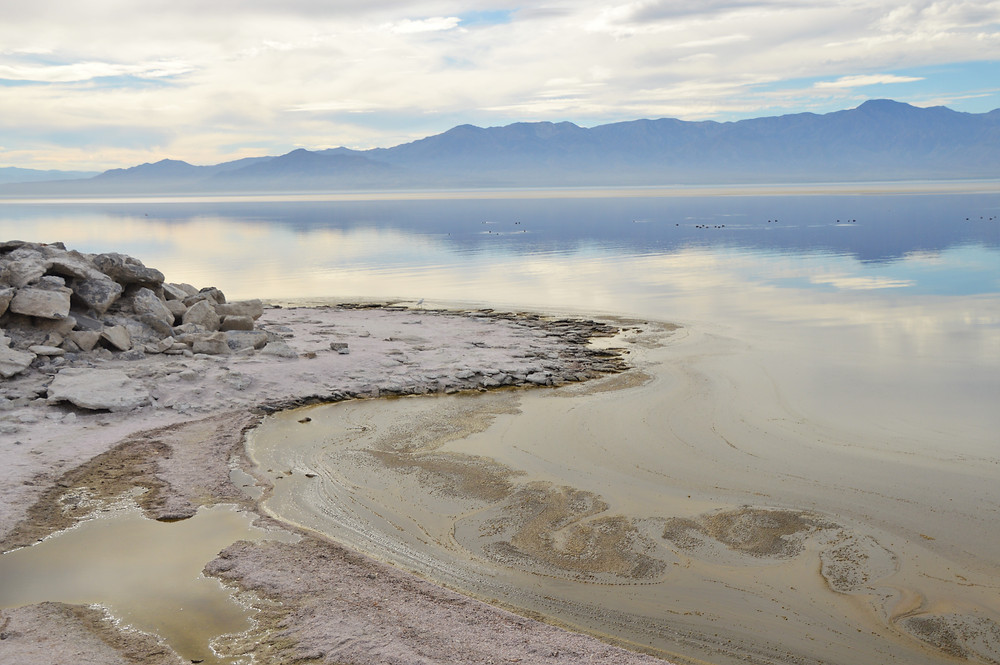 olors in Salton Sea water caused by out-of-control algae growth