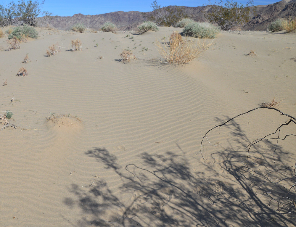 Hiking across the Pinto Dunes in the Turkey Flats in Joshua Tree National Park