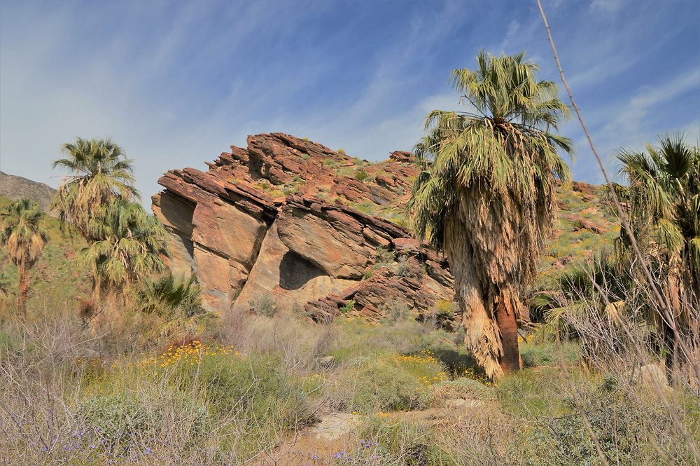 Rocks deformed by the angular thrusting movement of the tectonic plates in the Indian Canyons in Agua Caliente Reservation