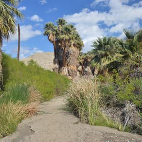 Hike Pushawalla Palms Loop: Mar 2020