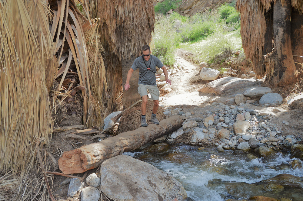 Balancing on a log trying to cross stream along the Murray Canyon trail in Agua Caliente Reservation