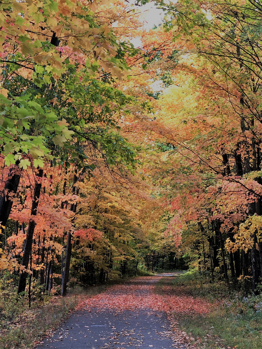 Fall foliage along Nashua Rail Trail in Pepperell, MA