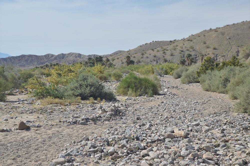 Sandy wash Willis Palm Trail Loop
