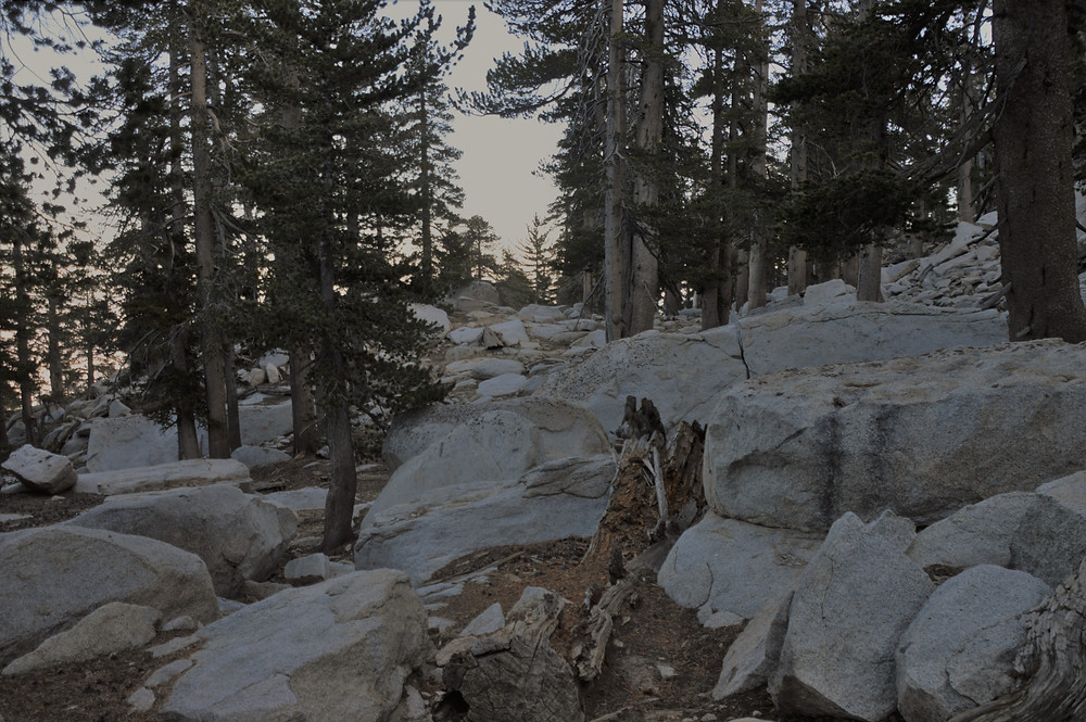 Light-colored igneous rock (granite) covered the slope of the San Jacinto summit trail