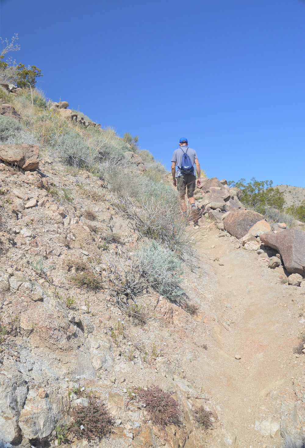 Hiking Cathedral Canyon Loop Trail in the Santa Rosa Mountains