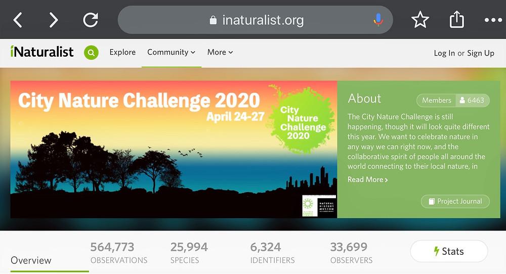 City Nature Challenge 2020 statistics