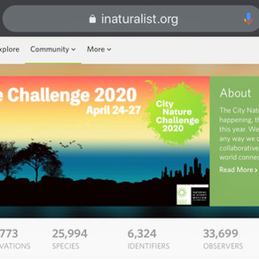 FODM: City Nature Challenge (CNC): Apr  2020