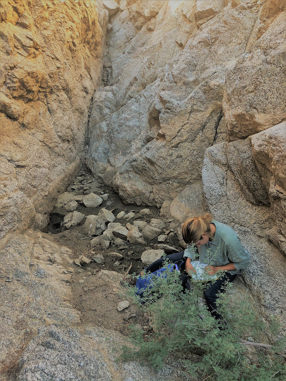 Tracking water sources with BLM tea in Santa Rosa Mountains. Friends of the Desert Mountains