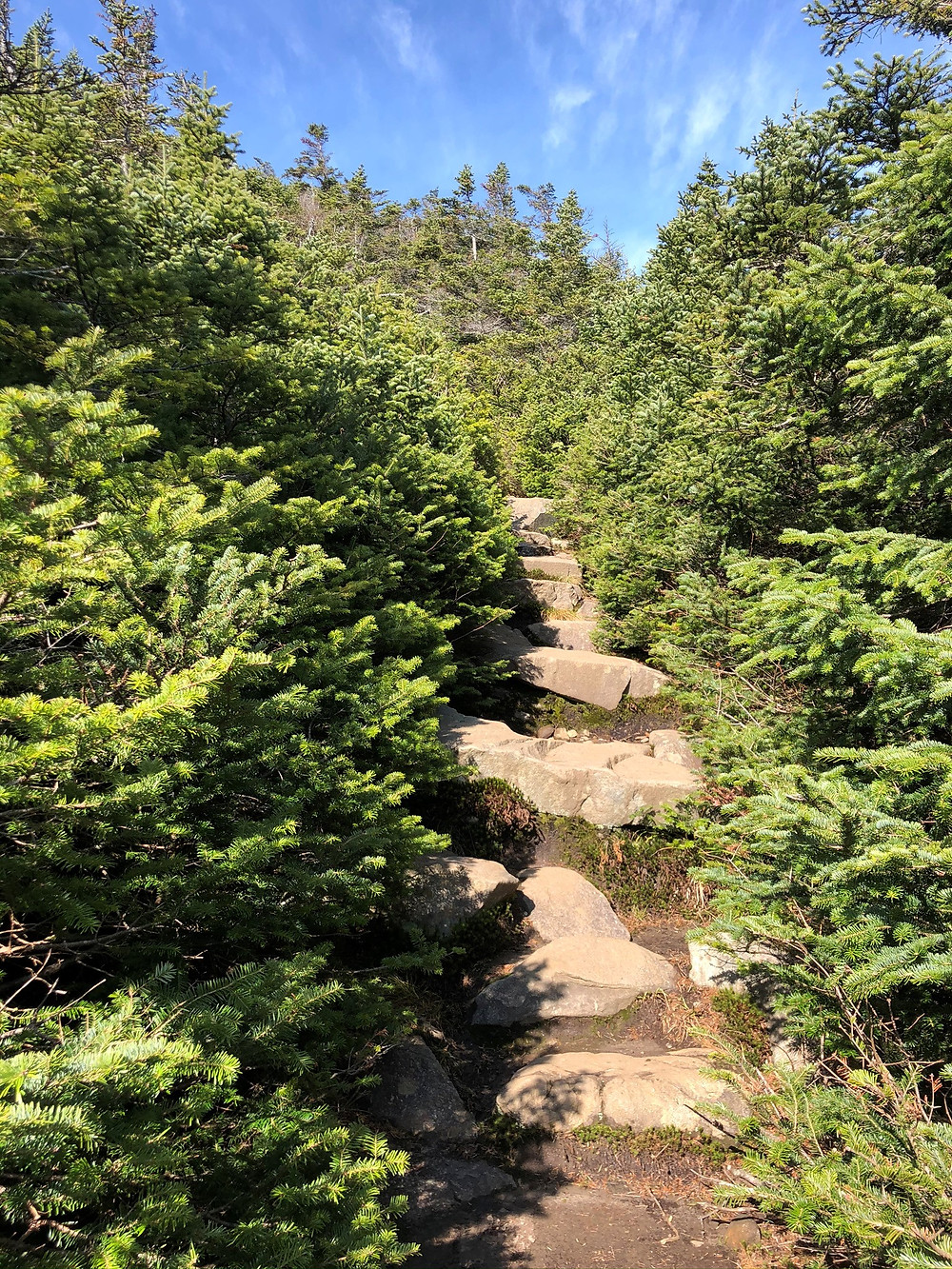 Gorge Brook trail continued up rocky switchbacks as trees grew shorter. Mt Moosilauke in NH. NH 4000 footer