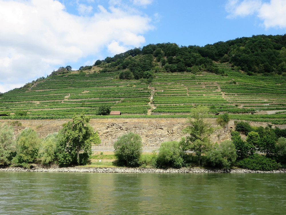 Vineyards of the Wachau Valley along the Danube River in Austria
