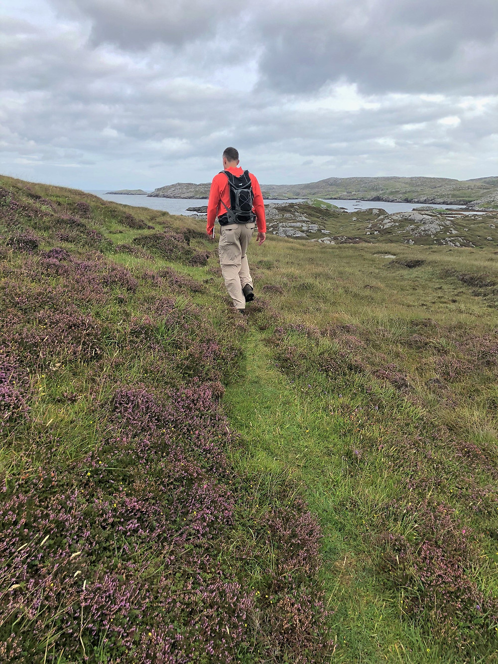 Fields were covered in flowering heather bushes on Great Bernera Loop hike on the NW coast of Isle of Lewis, Outer Hebrides