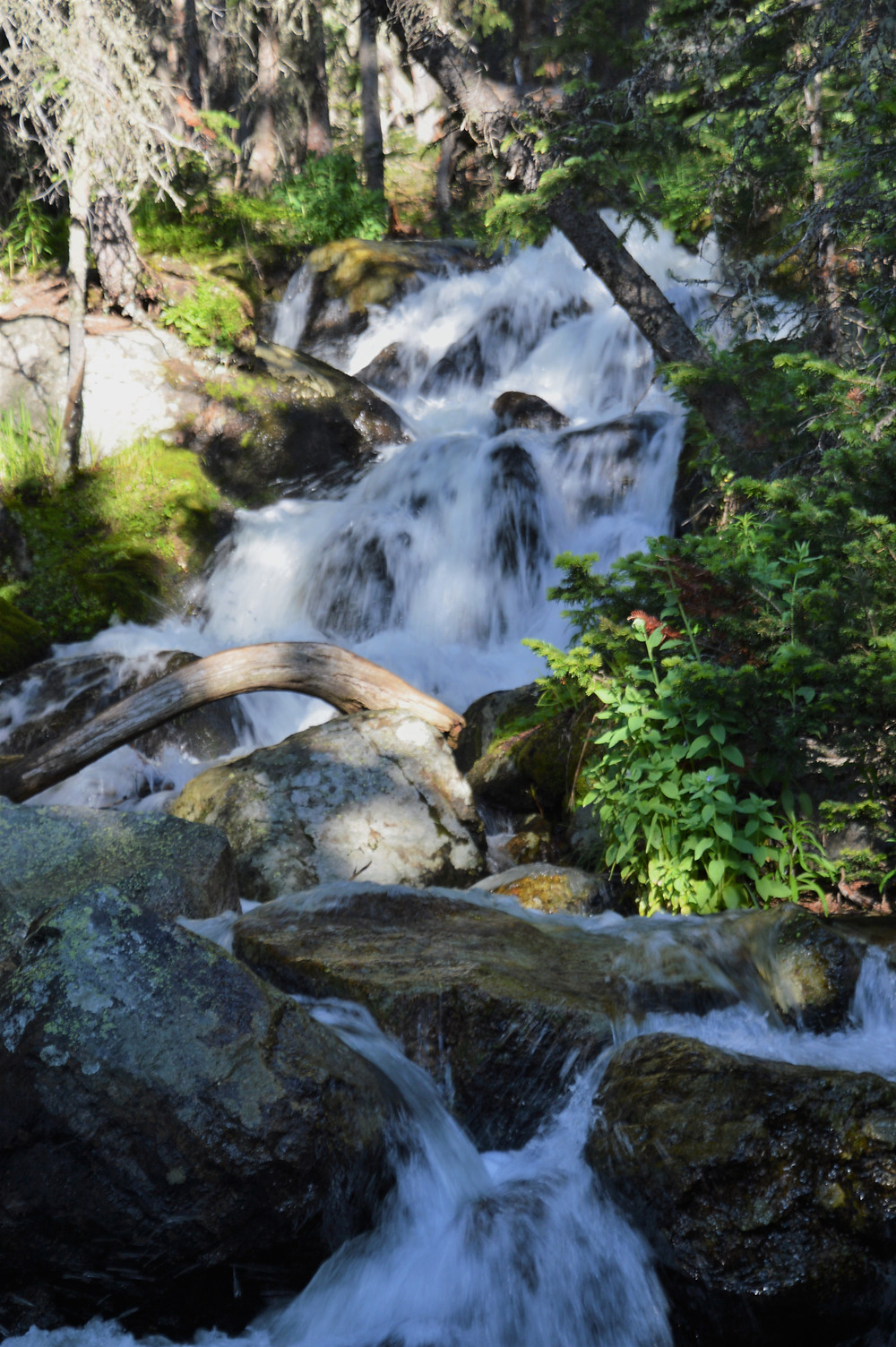 Streams along the Longs Peak trail on hike to Chasm Lake in Rocky Mountain National Park
