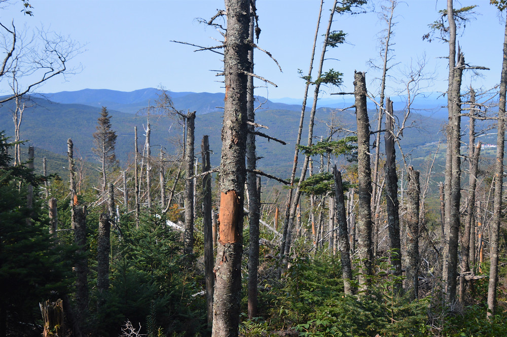 View of White Mountains from Edmands Path