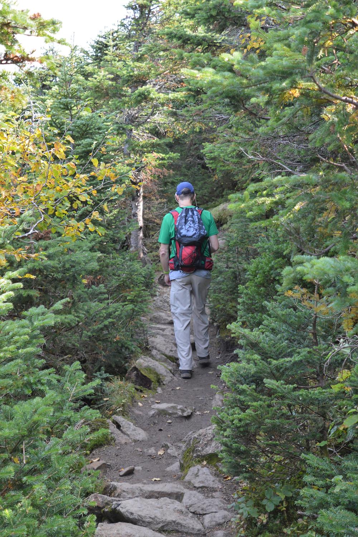 Dense forest along Edmands Path to Mt Eisenhower