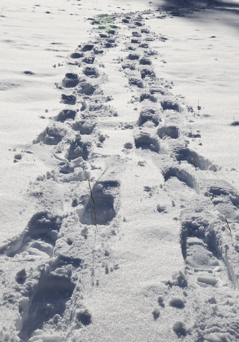 Snowshoe track in fresh fallen snow