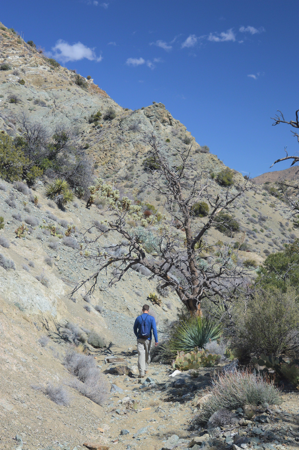 Hiking the Cactus Springs trail in the Santa Rosa Mountain Wilderness