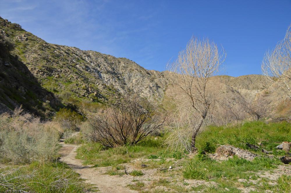 Hiking Big Morongo Canyon Trail in the Little San Bernardino Mountains in Morongo Valley