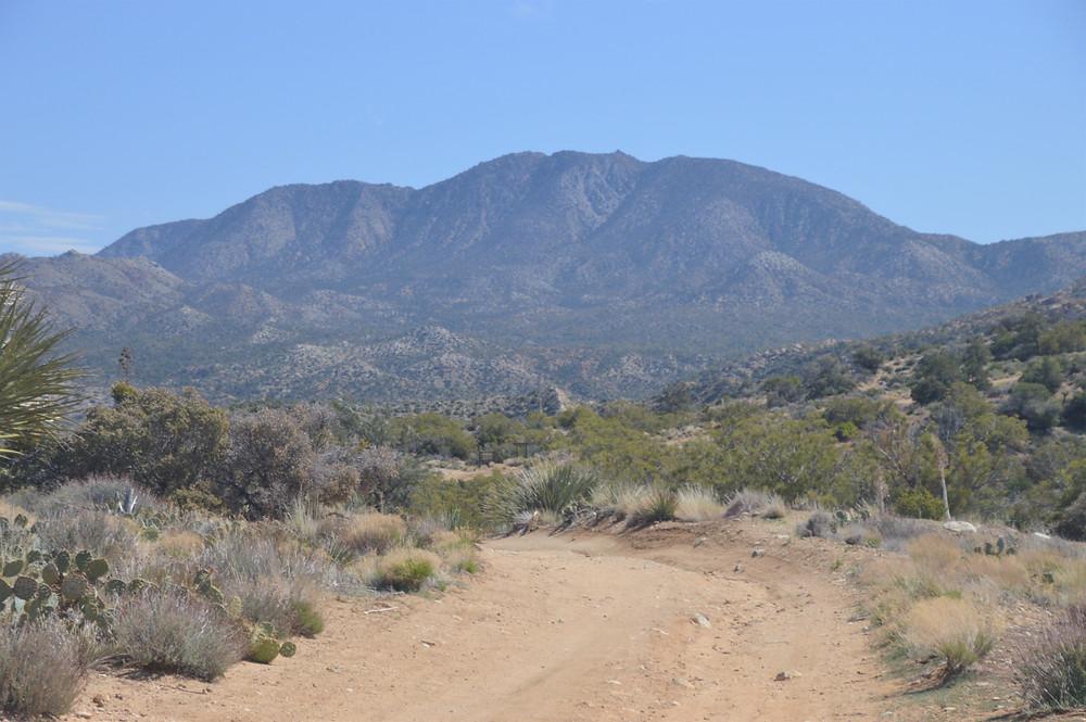 Martinez Mountain from Cactus Spring trailhead in Santa Rosa Mountain Wilderness
