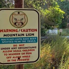 Big Morongo Canyon Trail: Mar 2019