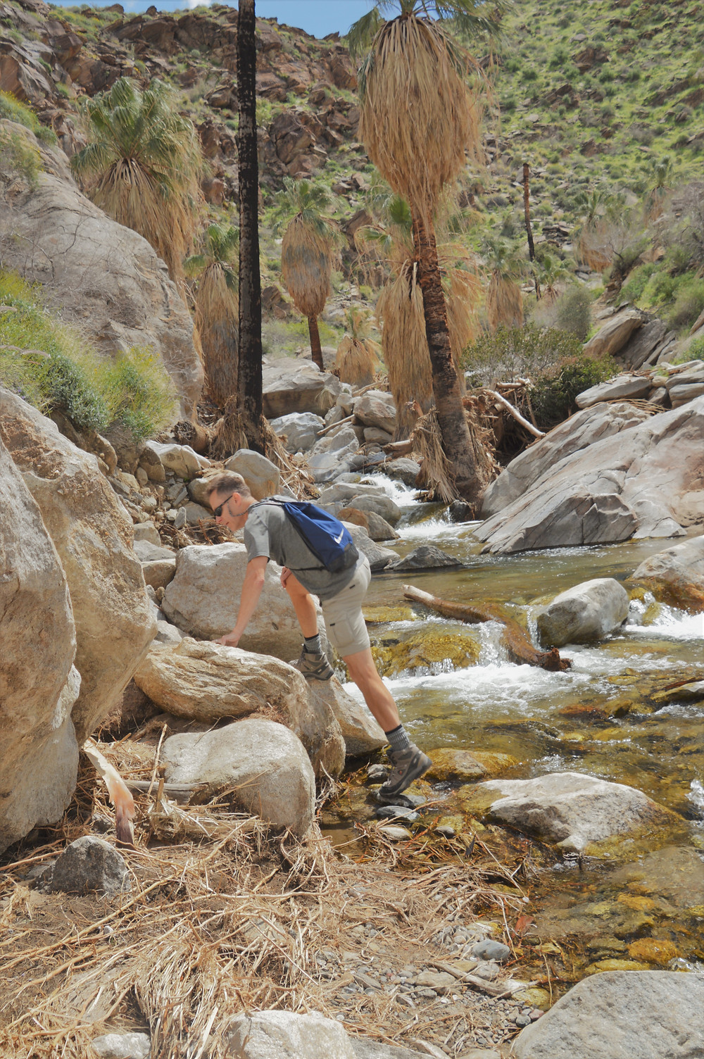 Hiking Murray Canyon in Agua Caliente Reservation winds up into the crevices of San Jacinto Mountains