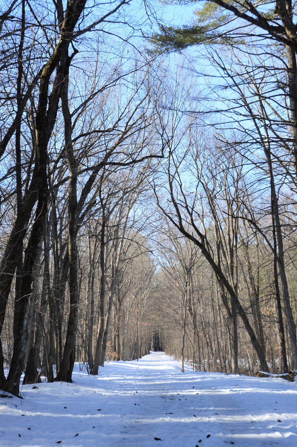 Tree covered trail in Mine Falls Park in Nashua NH