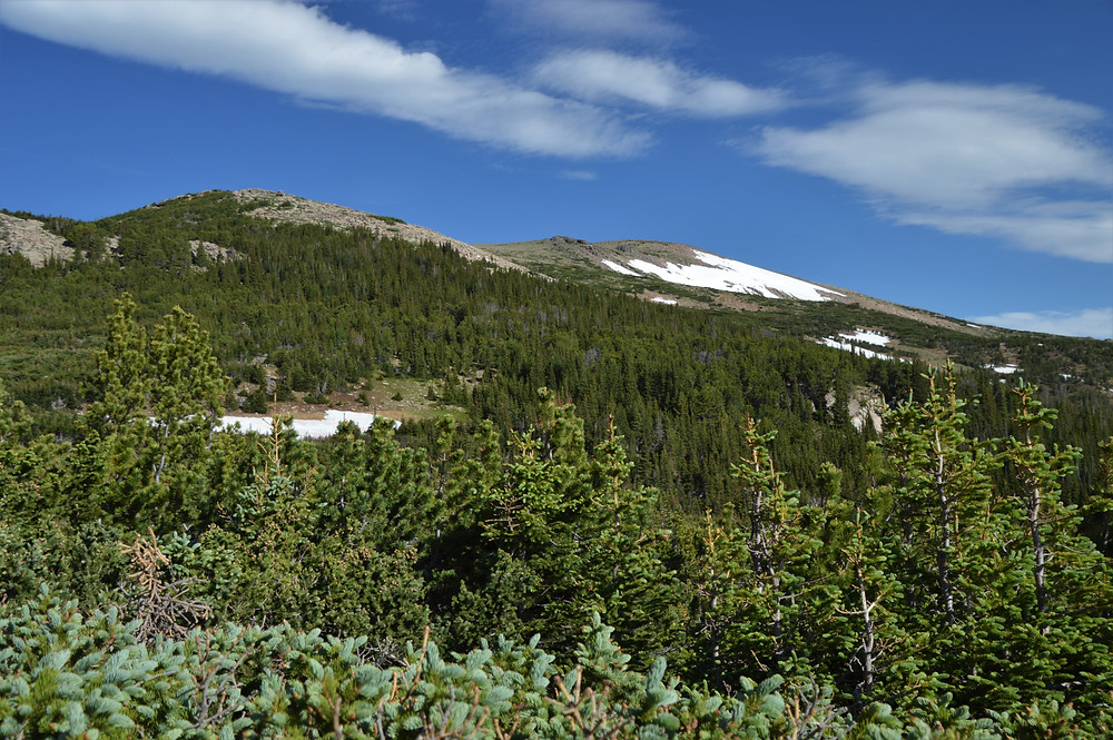 Hiking in subalpine zone along the trail leading to Flattop Mountain in Rocky Mountain National PArk