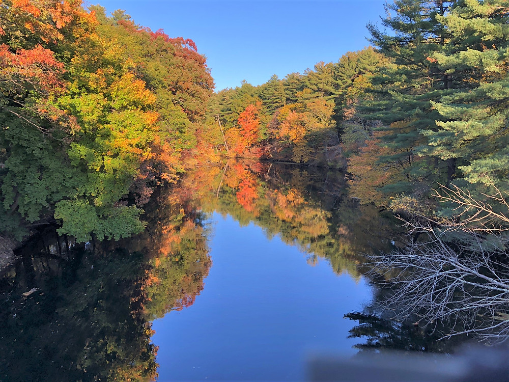 Fall colors in tree along Nashua River in Mine Falls Park in Nashua NH