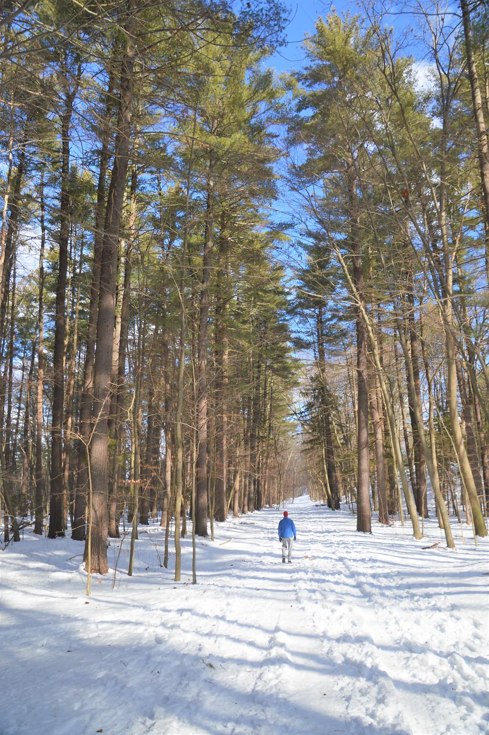 Walking trails in Mine Falls Park in Nashua NH