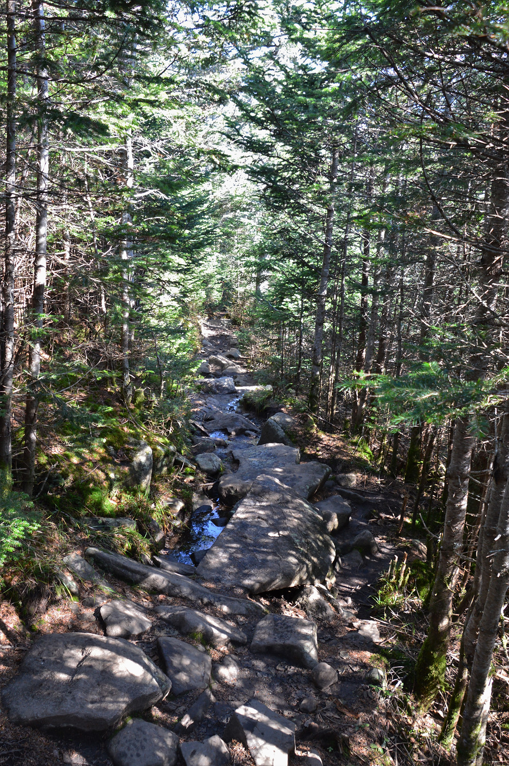Rocky and wet section of Gorge Brook Trail leading to the summit of Mt Moosilauke in NH.  NH 4000 footer