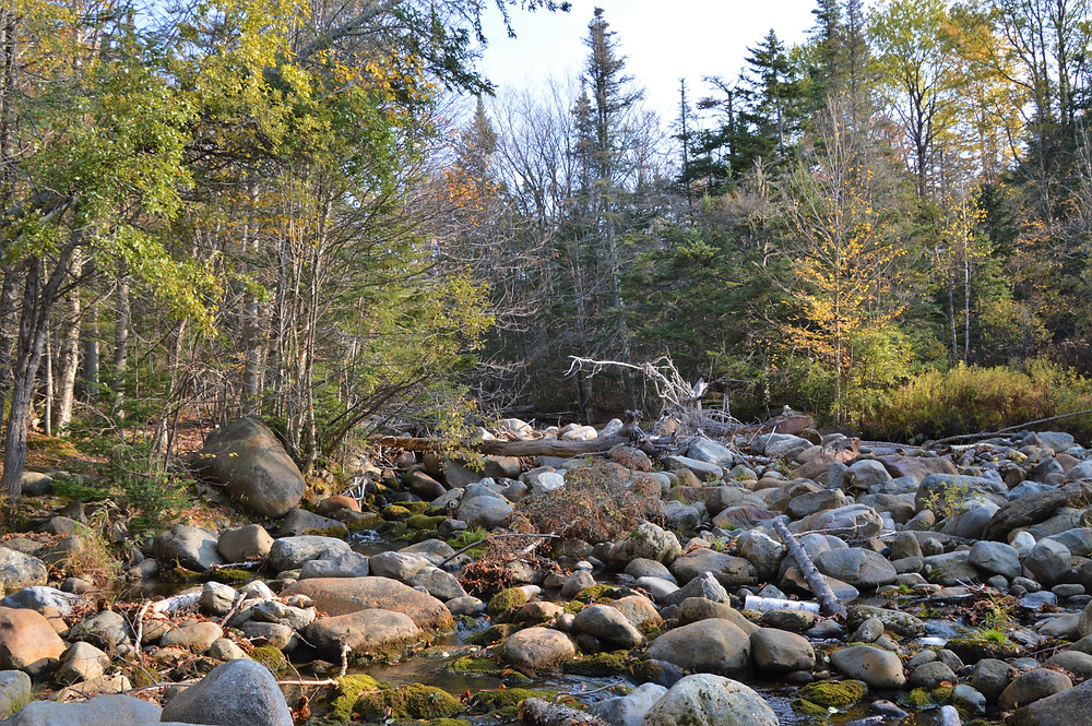 The start of Gorge Brook Trail to the summit of Mt Moosilauke followed the Baker River.