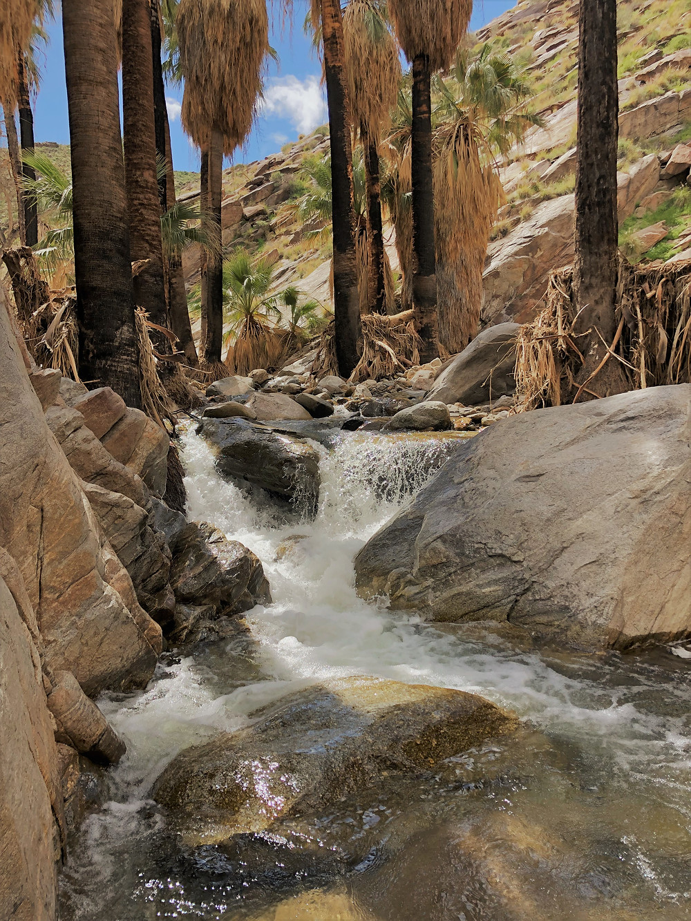 Streams along the Murray Canyon trail in Agua Caliente Reservation
