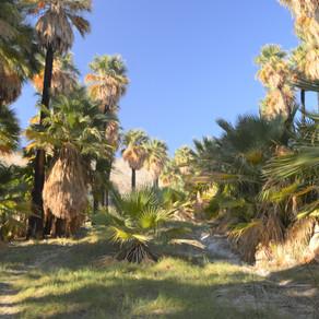 Hike Willis Palms Oasis: May 2020