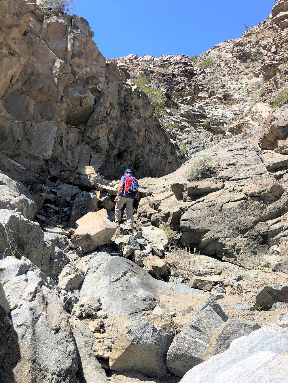 Trying to climb rock wall out of Lost Canyon in the Santa Rosa Mountains