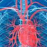 vascular s.jpg