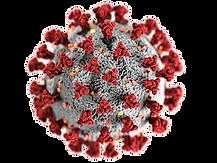 coronavirus-png.png