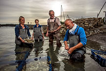 Oysters farm in France